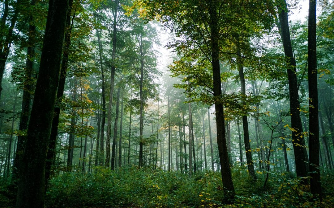 Supporting the forestry and wood sector through Covid-19